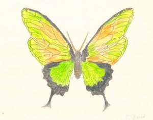 Butterfly - Cherie Fine Art Studio