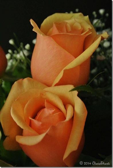 www.CherieShanti.com