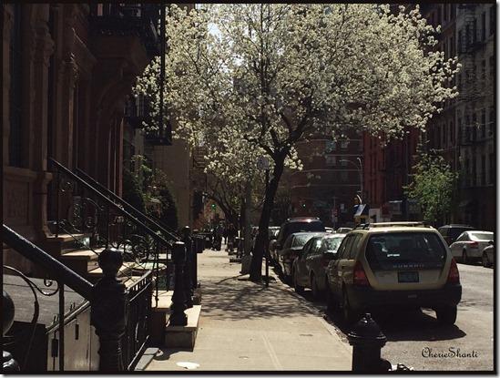 CherieShanti - NYC