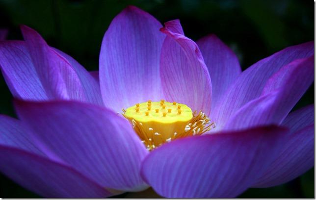 CherieShanti.com - Moonbeams and Lotus