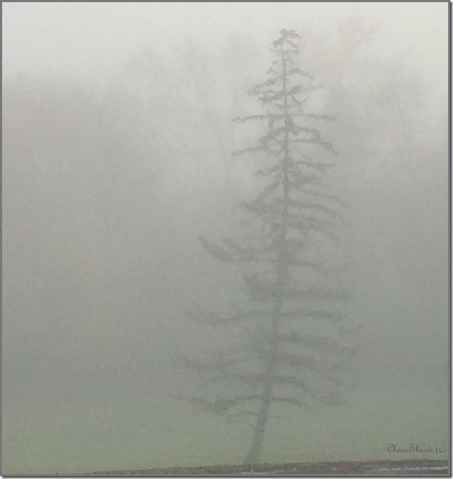 CherieShanti - Lone Pine