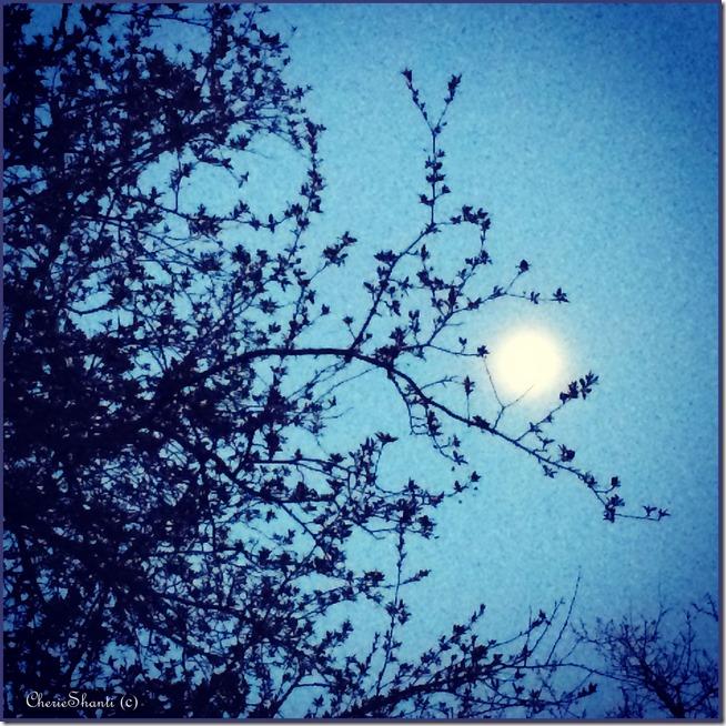 CherieShanti - enchanting l'heure bleue