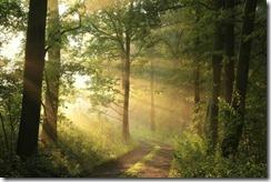 InnerPathWisdom.com - bosques-cambio-climático[3]